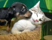 friendship-kitten&pup
